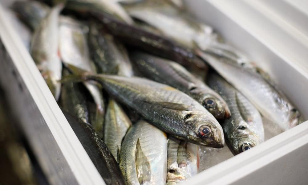旬のお魚情報